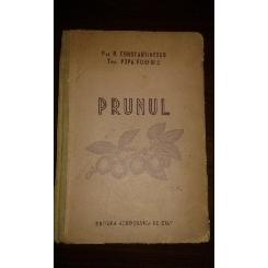 PRUNUL, PROF. N. CONSTANTINESCU, TEHN. POPA PORFIRIE